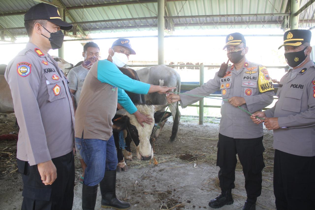 Polres Brebes Salurkan Hewan Kurban 7 Ekor Sapi ke Ponpes dan Masyarakat Terdampak PPKM Darurat