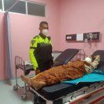 Tangis Pecah di Tol Cipali, Sigap Polantas Polres Majalengka Selamatkan Ibu Melahirkan di Bus